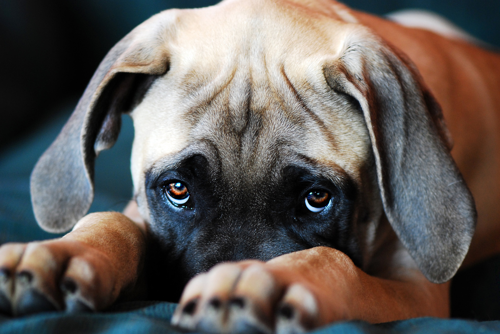 Why Owning A Dog Is Better Than Having A Boyfriend